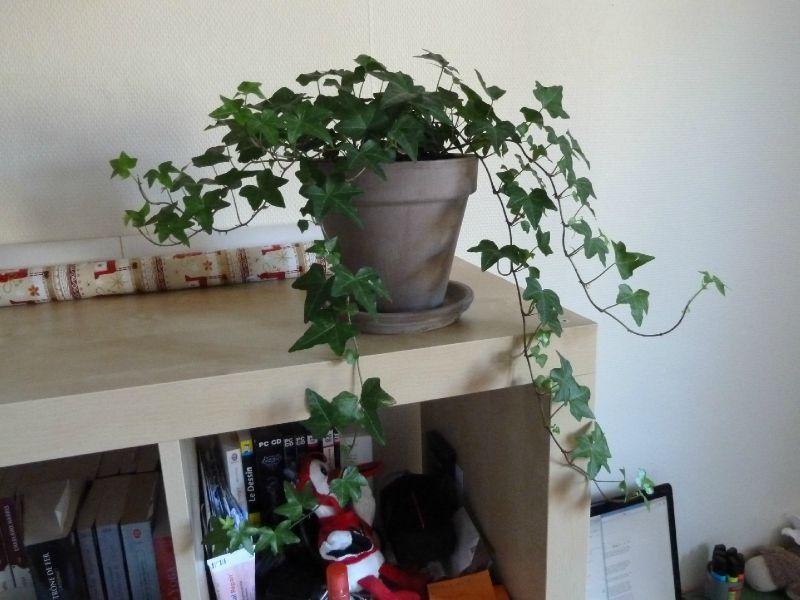 Appel tous classe de sandra for Plantes interieur tombantes